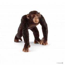 Cimpanzeu mascul sl14817