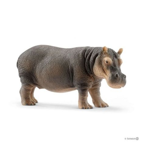 Hipopotam sl14814
