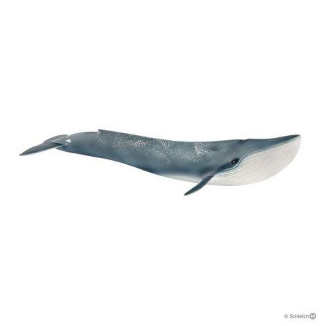 Balena albastra sl14806