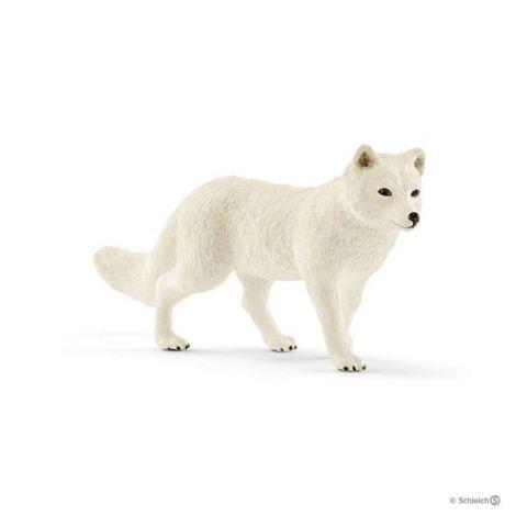 Vulpe polara sl14805