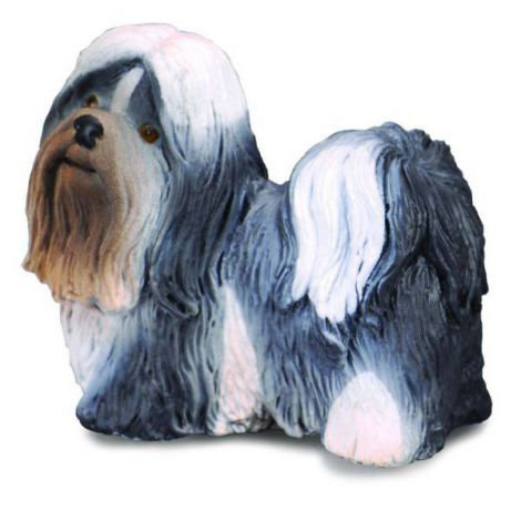 Shih Tzu - Collecta