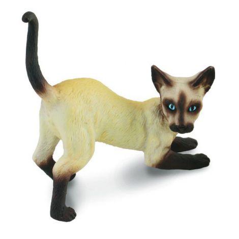 Pisica siameza - Collecta