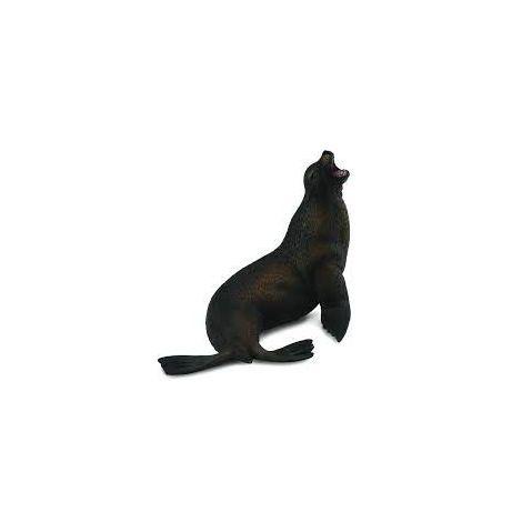 Leu de mare- Collecta