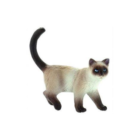 Pisica siameza Kimmy