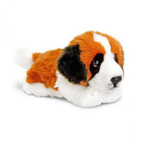 Plus 30cm Catel Saint Bernard