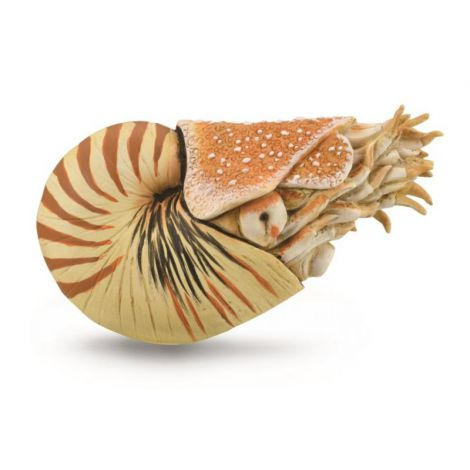 Figurina pictata manual Nautilus Pompilius
