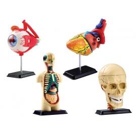 Set Anatomia Corpului Uman
