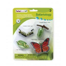 Ciclul Vietii La Fluturele Monarh