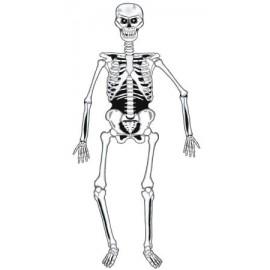 Decor schelet
