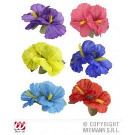 Clama hibiscus