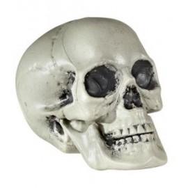 Cap schelet