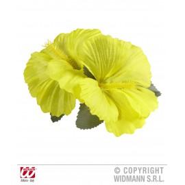 Clama hawaii galbena