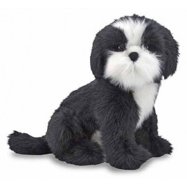 Catel Shih Tzu din plus
