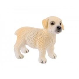 Pui Golden Retriever