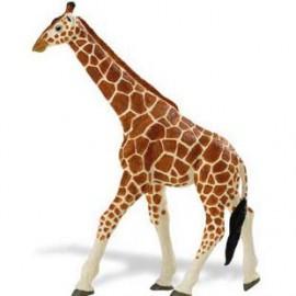 Girafa Somaleza
