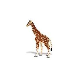 Girafa - 12