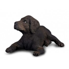 Labrador Retriever Pui