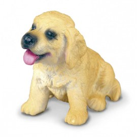 Golden Retriever Pui