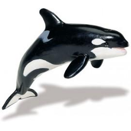 Balena Ucigasa Adult