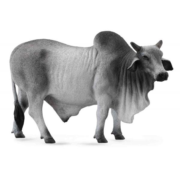 cum să afli acest taur
